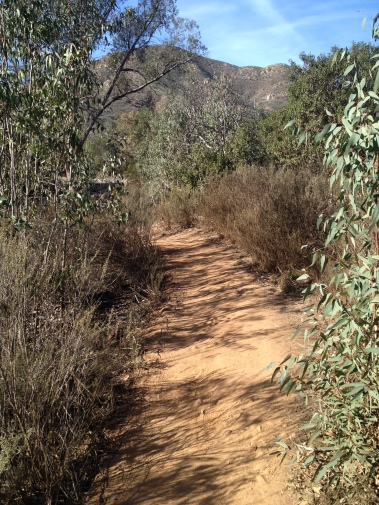 Beautiful trail leading into Del Dios aid station