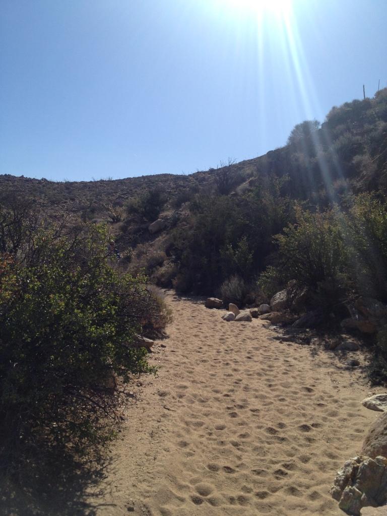 Sandy down on the desert floor.